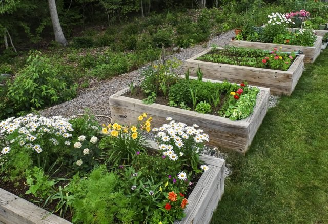 Raised beds for accessible gardening at RiverWoods Exeter in Exeter, New Hampshire.